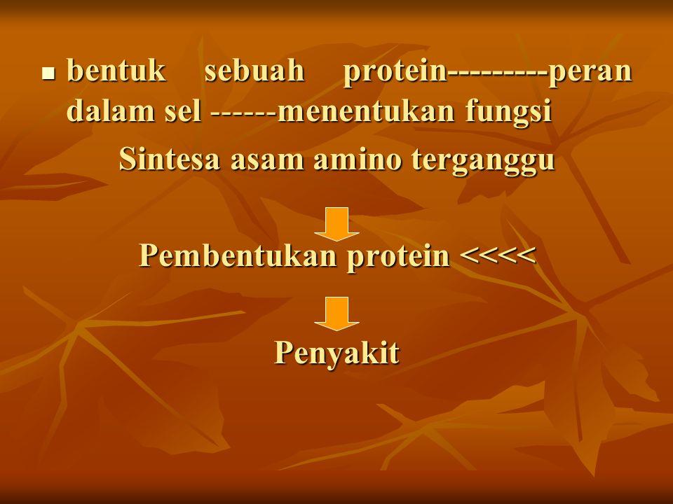 bentuk sebuah protein---------peran dalam sel ------menentukan fungsi bentuk sebuah protein---------peran dalam sel ------menentukan fungsi Sintesa as