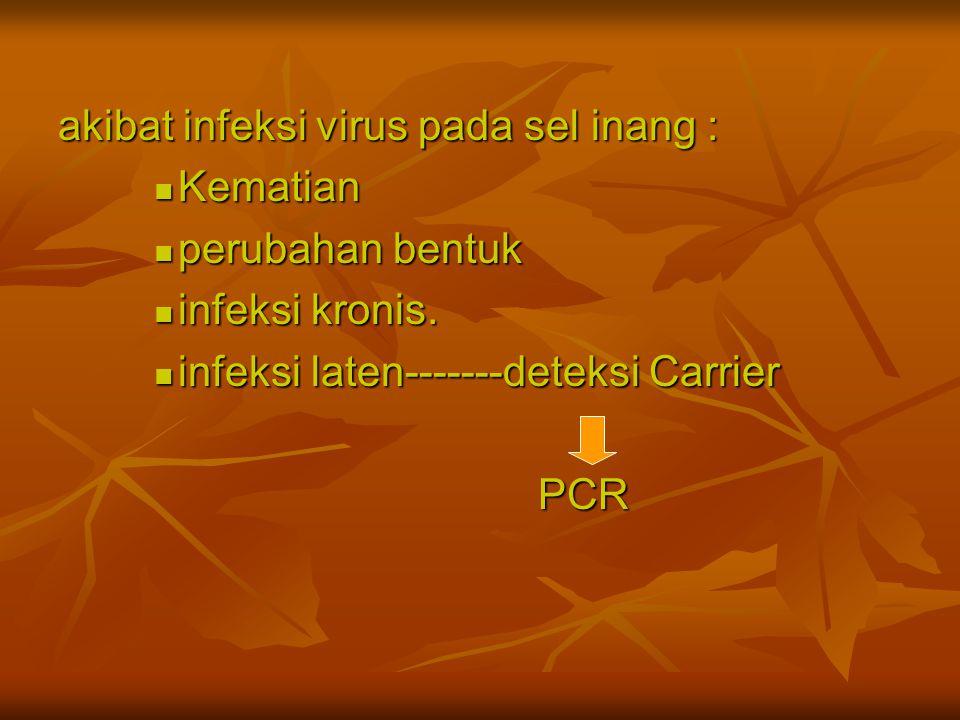 akibat infeksi virus pada sel inang : Kematian perubahan bentuk infeksi kronis. infeksi laten-------deteksi Carrier PCR