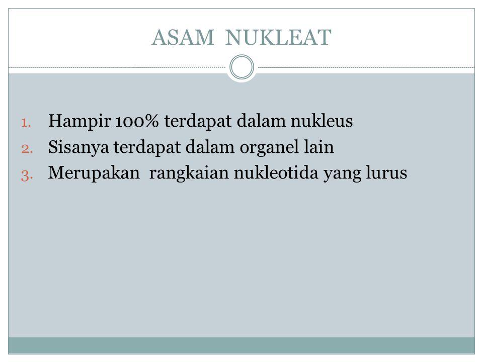 ASAM NUKLEAT 1. Hampir 100% terdapat dalam nukleus 2. Sisanya terdapat dalam organel lain 3. Merupakan rangkaian nukleotida yang lurus