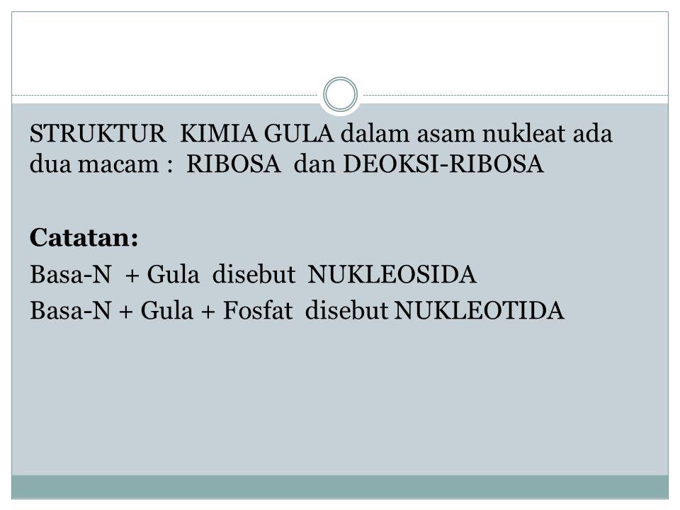 STRUKTUR KIMIA GULA dalam asam nukleat ada dua macam : RIBOSA dan DEOKSI-RIBOSA Catatan: Basa-N + Gula disebut NUKLEOSIDA Basa-N + Gula + Fosfat diseb