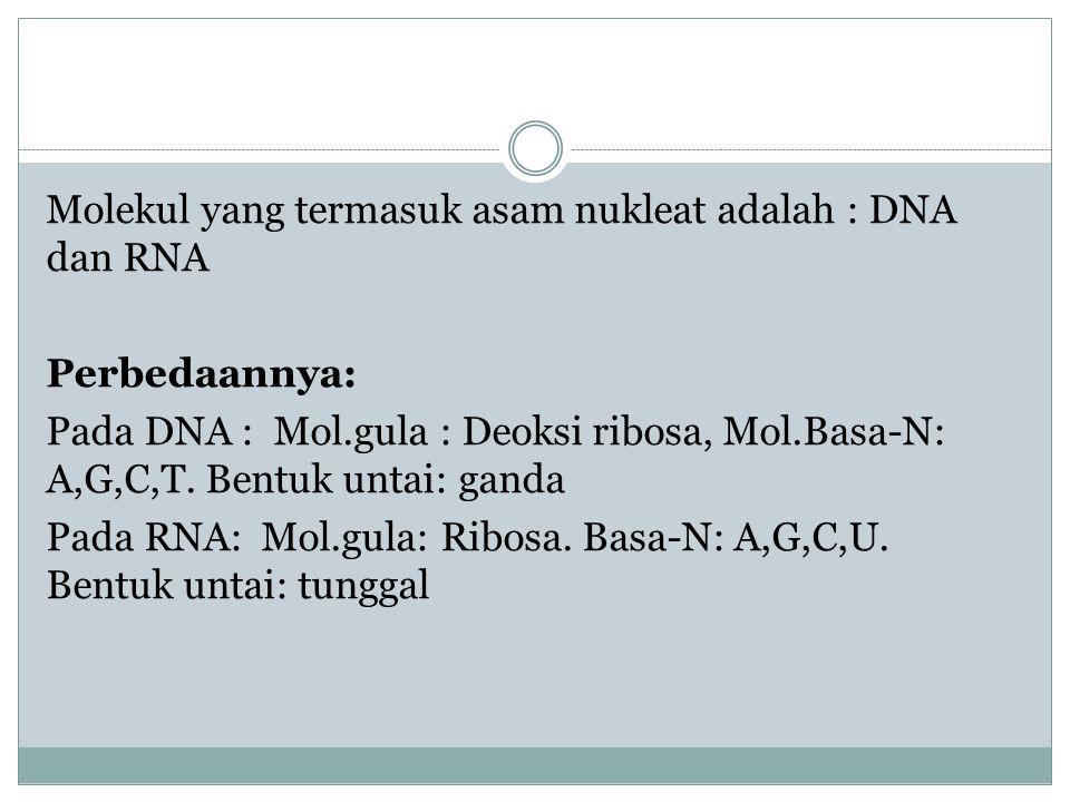 Molekul yang termasuk asam nukleat adalah : DNA dan RNA Perbedaannya: Pada DNA : Mol.gula : Deoksi ribosa, Mol.Basa-N: A,G,C,T. Bentuk untai: ganda Pa