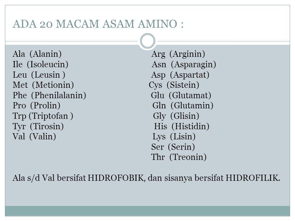 ADA 20 MACAM ASAM AMINO : Ala (Alanin) Arg (Arginin) Ile (Isoleucin) Asn (Asparagin) Leu (Leusin ) Asp (Aspartat) Met (Metionin) Cys (Sistein) Phe (Ph