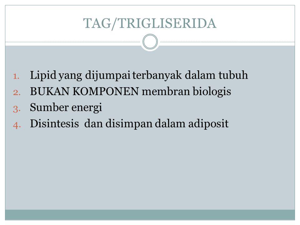 TAG/TRIGLISERIDA 1. Lipid yang dijumpai terbanyak dalam tubuh 2. BUKAN KOMPONEN membran biologis 3. Sumber energi 4. Disintesis dan disimpan dalam adi