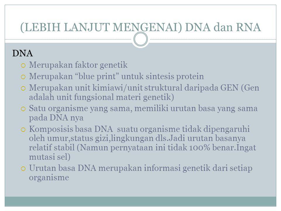"(LEBIH LANJUT MENGENAI) DNA dan RNA DNA  Merupakan faktor genetik  Merupakan ""blue print"" untuk sintesis protein  Merupakan unit kimiawi/unit struk"