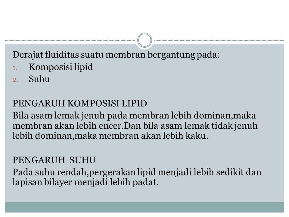 Derajat fluiditas suatu membran bergantung pada: 1. Komposisi lipid 2. Suhu PENGARUH KOMPOSISI LIPID Bila asam lemak jenuh pada membran lebih dominan,