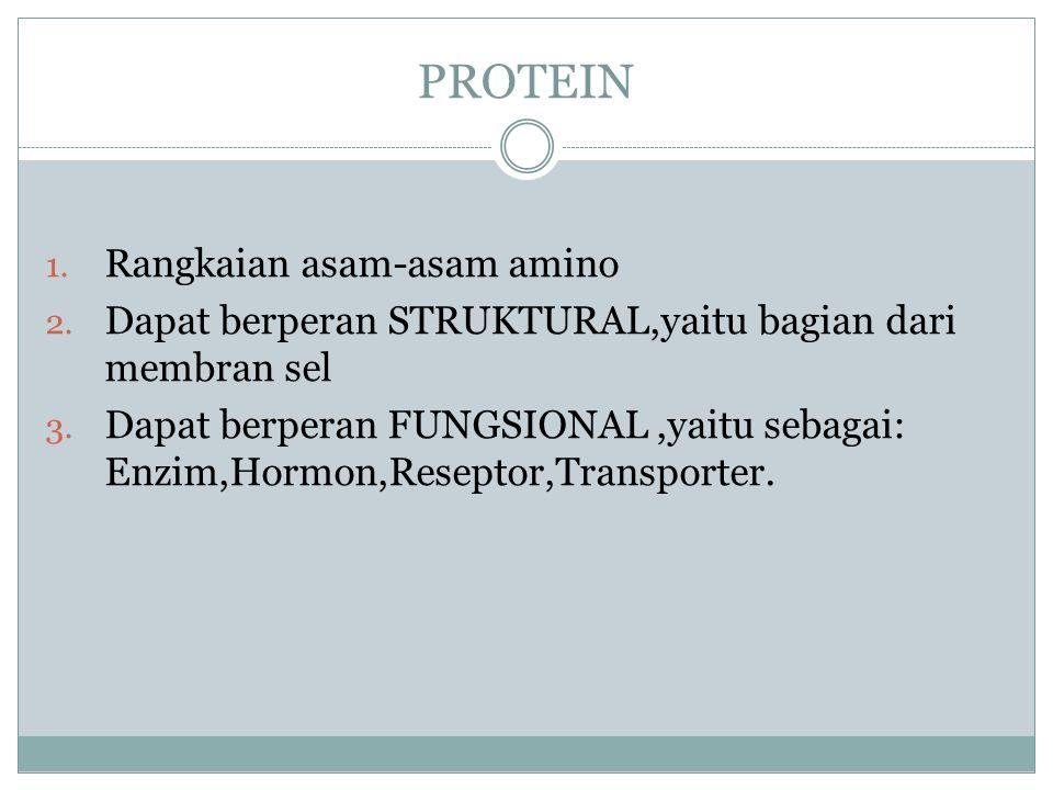 PROTEIN 1. Rangkaian asam-asam amino 2. Dapat berperan STRUKTURAL,yaitu bagian dari membran sel 3. Dapat berperan FUNGSIONAL,yaitu sebagai: Enzim,Horm
