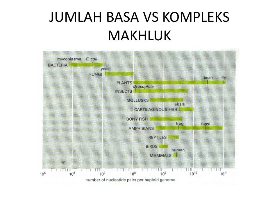 JUMLAH BASA VS KOMPLEKS MAKHLUK