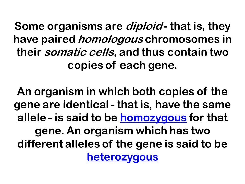 Some organisms are diploid - that is, they have paired homologous chromosomes in their somatic cells, and thus contain two copies of each gene. An org