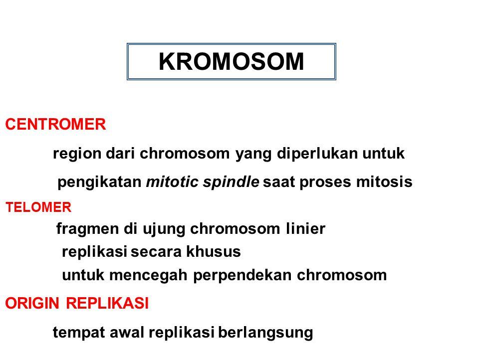 KROMOSOM CENTROMER region dari chromosom yang diperlukan untuk pengikatan mitotic spindle saat proses mitosis TELOMER fragmen di ujung chromosom linie