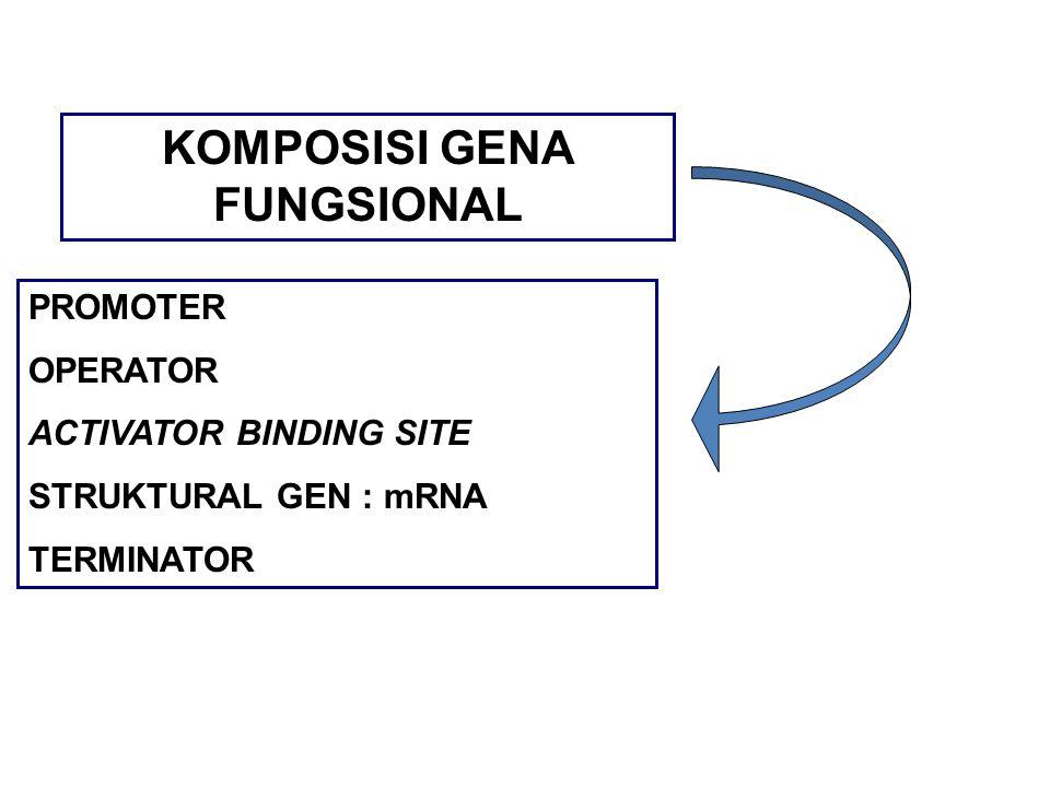 KOMPOSISI GENA FUNGSIONAL PROMOTER OPERATOR ACTIVATOR BINDING SITE STRUKTURAL GEN : mRNA TERMINATOR