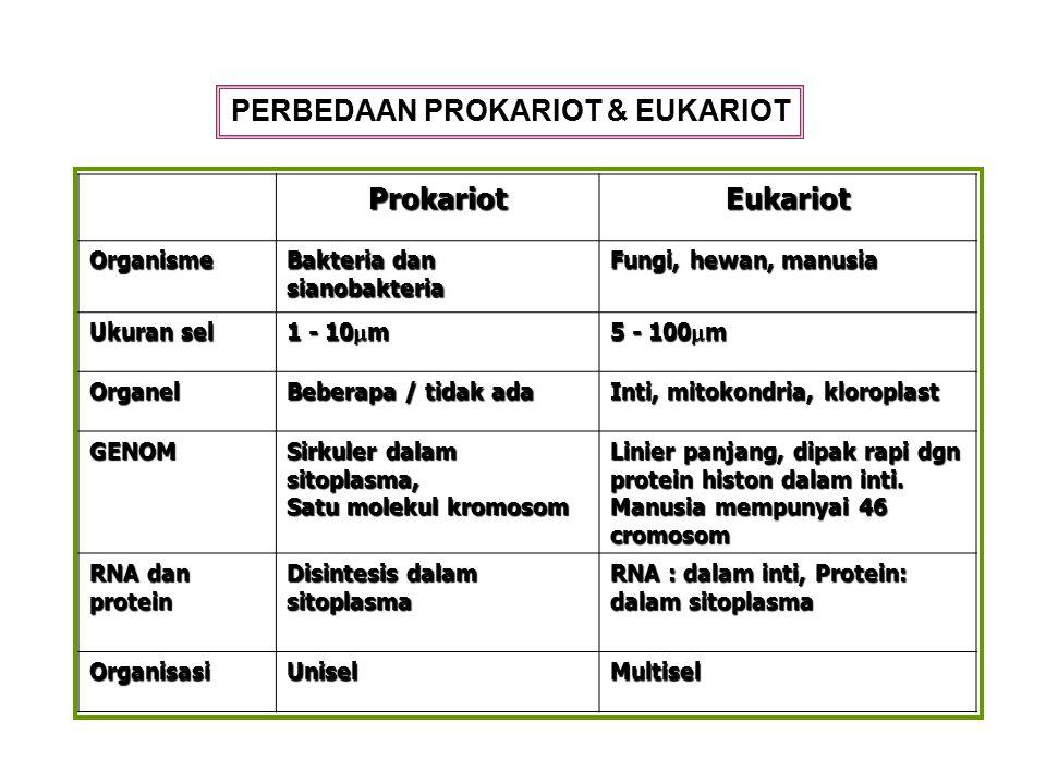 ProkariotEukariot Organisme Bakteria dan sianobakteria Fungi, hewan, manusia Ukuran sel 1 - 10  m 5 - 100  m Organel Beberapa / tidak ada Inti, mito