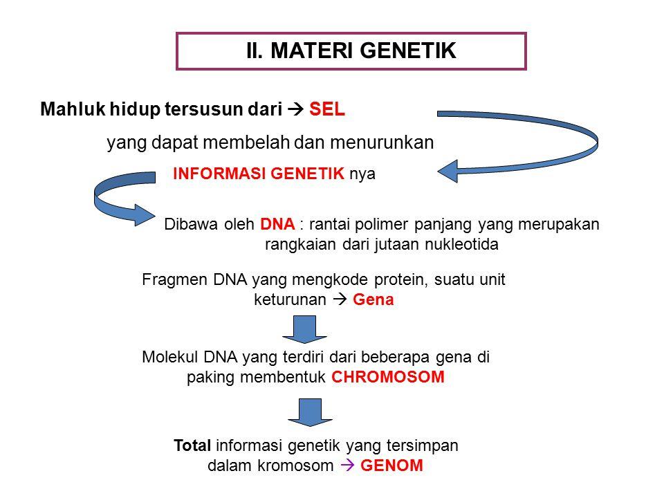 II. MATERI GENETIK Mahluk hidup tersusun dari  SEL yang dapat membelah dan menurunkan INFORMASI GENETIK nya Dibawa oleh DNA : rantai polimer panjang