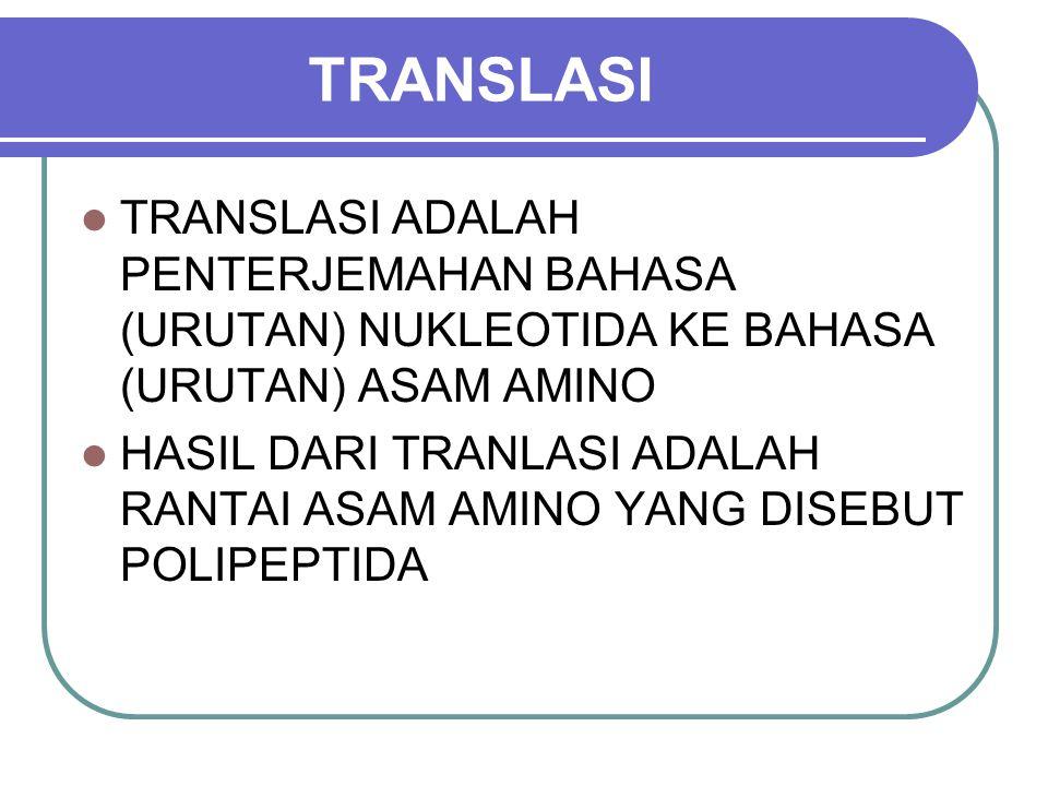 TRANSLASI TRANSLASI ADALAH PENTERJEMAHAN BAHASA (URUTAN) NUKLEOTIDA KE BAHASA (URUTAN) ASAM AMINO HASIL DARI TRANLASI ADALAH RANTAI ASAM AMINO YANG DI