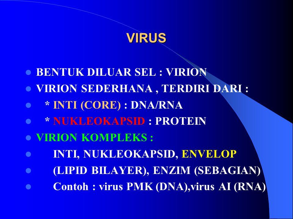 VIRUS BENTUK DILUAR SEL : VIRION VIRION SEDERHANA, TERDIRI DARI : * INTI (CORE) : DNA/RNA * NUKLEOKAPSID : PROTEIN VIRION KOMPLEKS : INTI, NUKLEOKAPSI