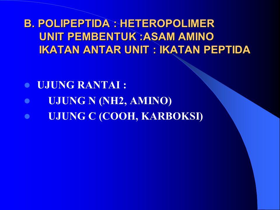 B. POLIPEPTIDA : HETEROPOLIMER UNIT PEMBENTUK :ASAM AMINO IKATAN ANTAR UNIT : IKATAN PEPTIDA UJUNG RANTAI : UJUNG N (NH2, AMINO) UJUNG C (COOH, KARBOK