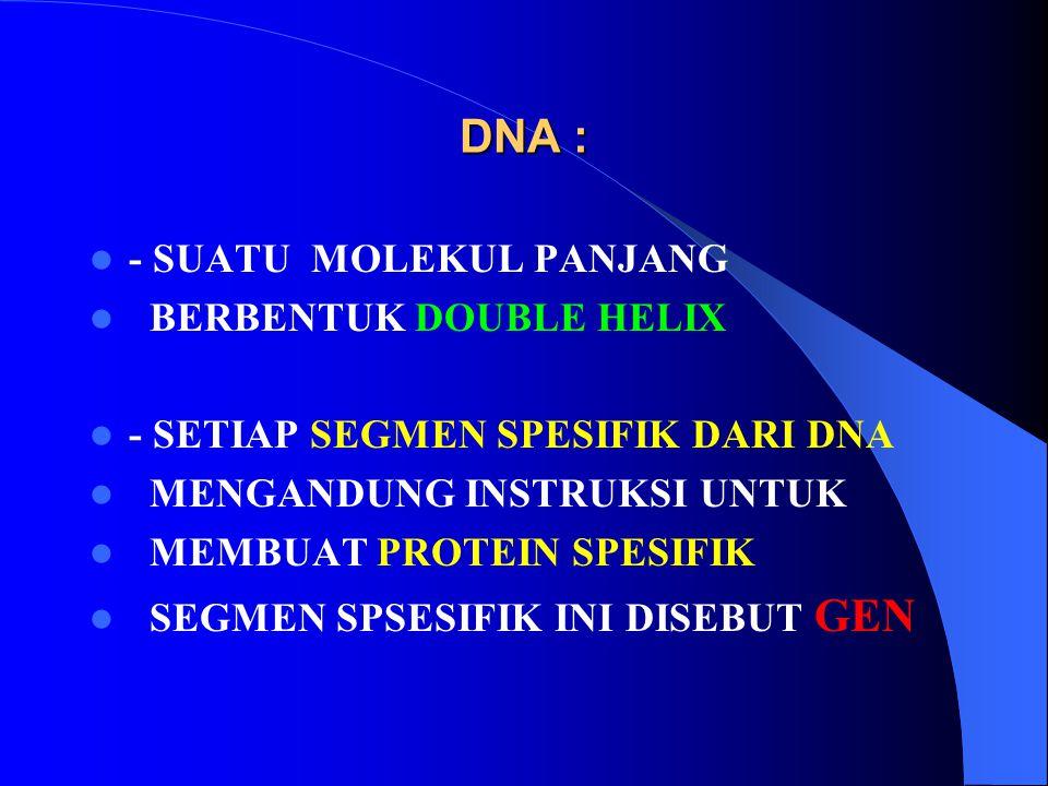 DNA : - SUATU MOLEKUL PANJANG BERBENTUK DOUBLE HELIX - SETIAP SEGMEN SPESIFIK DARI DNA MENGANDUNG INSTRUKSI UNTUK MEMBUAT PROTEIN SPESIFIK SEGMEN SPSE