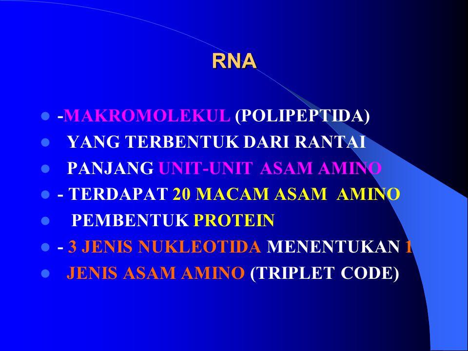 RNA -MAKROMOLEKUL (POLIPEPTIDA) YANG TERBENTUK DARI RANTAI PANJANG UNIT-UNIT ASAM AMINO - TERDAPAT 20 MACAM ASAM AMINO PEMBENTUK PROTEIN - 3 JENIS NUK