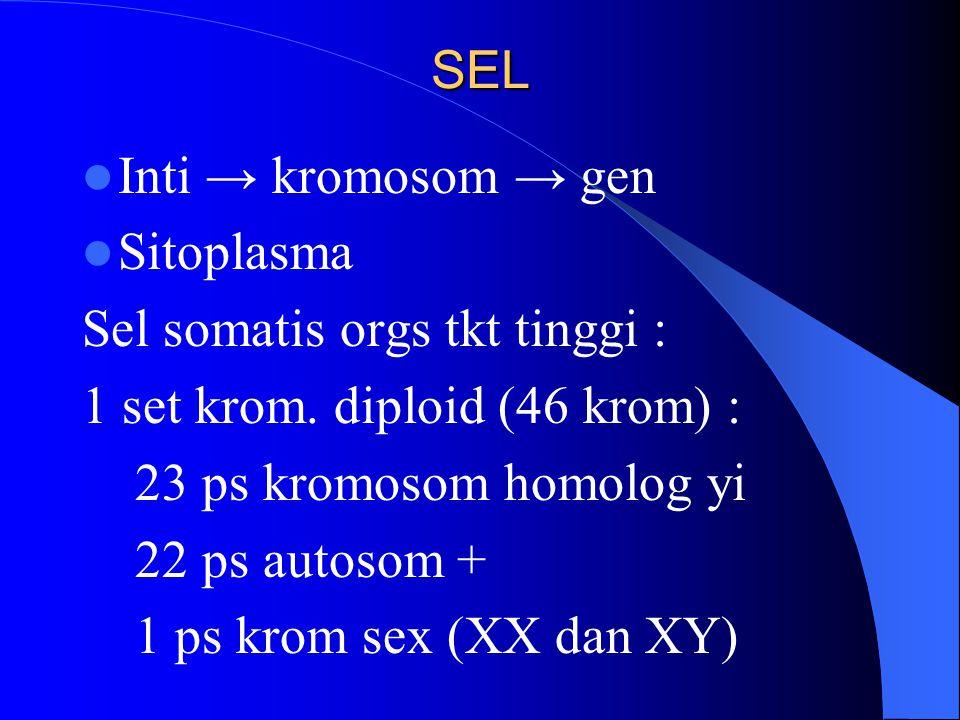 SEL Inti → kromosom → gen Sitoplasma Sel somatis orgs tkt tinggi : 1 set krom. diploid (46 krom) : 23 ps kromosom homolog yi 22 ps autosom + 1 ps krom