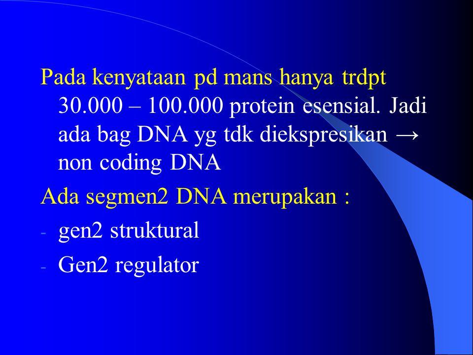 Pada kenyataan pd mans hanya trdpt 30.000 – 100.000 protein esensial. Jadi ada bag DNA yg tdk diekspresikan → non coding DNA Ada segmen2 DNA merupakan