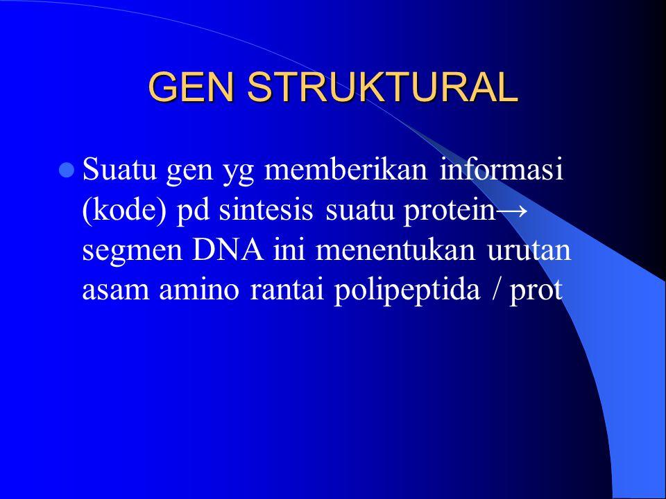 GEN STRUKTURAL Suatu gen yg memberikan informasi (kode) pd sintesis suatu protein→ segmen DNA ini menentukan urutan asam amino rantai polipeptida / pr