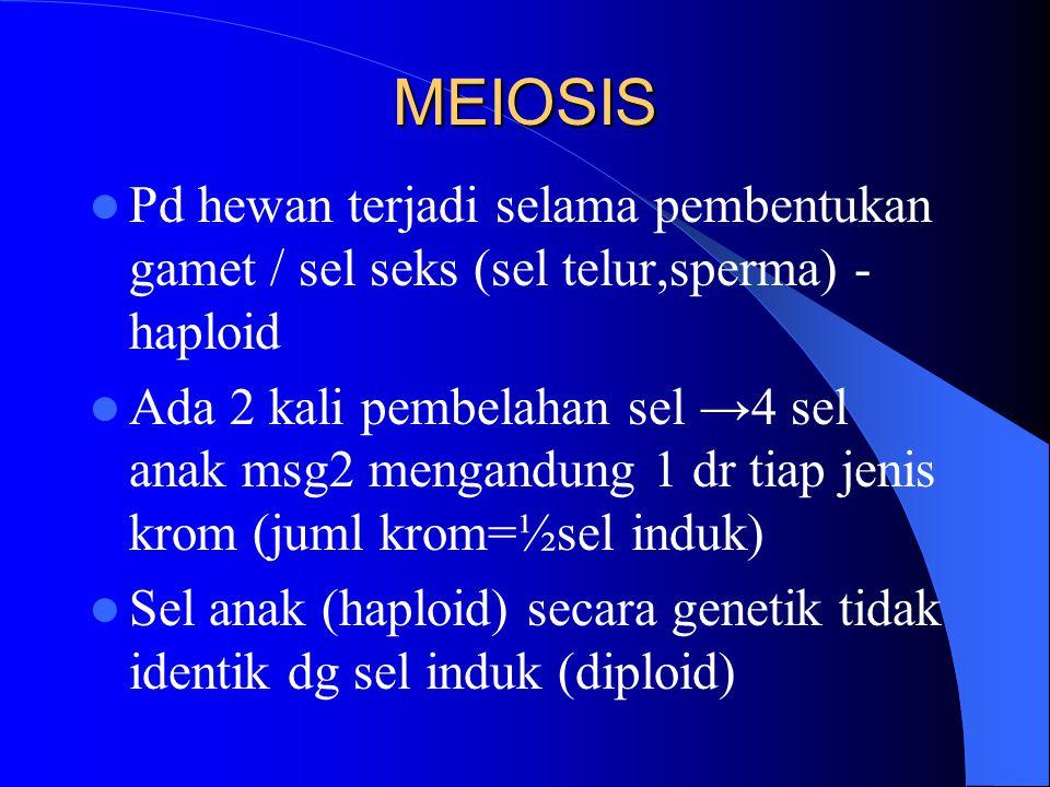 MEIOSIS Pd hewan terjadi selama pembentukan gamet / sel seks (sel telur,sperma) - haploid Ada 2 kali pembelahan sel →4 sel anak msg2 mengandung 1 dr t