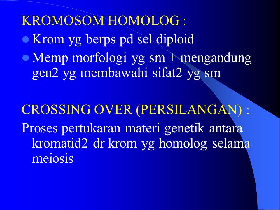 KROMOSOM HOMOLOG : Krom yg berps pd sel diploid Memp morfologi yg sm + mengandung gen2 yg membawahi sifat2 yg sm CROSSING OVER (PERSILANGAN) : Proses