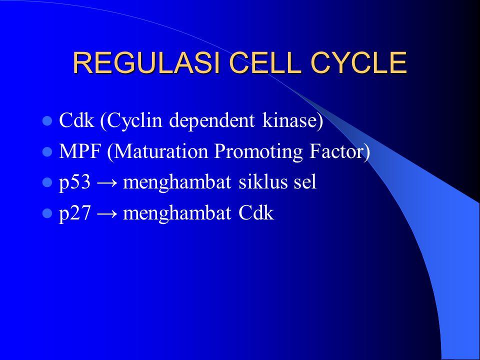 REGULASI CELL CYCLE Cdk (Cyclin dependent kinase) MPF (Maturation Promoting Factor) p53 → menghambat siklus sel p27 → menghambat Cdk