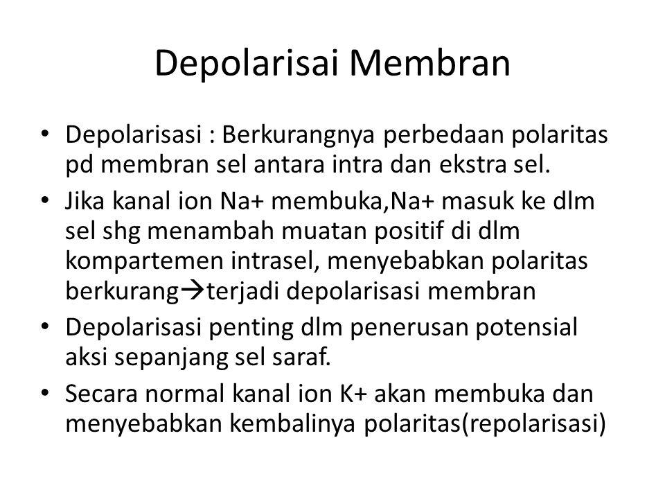Depolarisai Membran Depolarisasi : Berkurangnya perbedaan polaritas pd membran sel antara intra dan ekstra sel. Jika kanal ion Na+ membuka,Na+ masuk k
