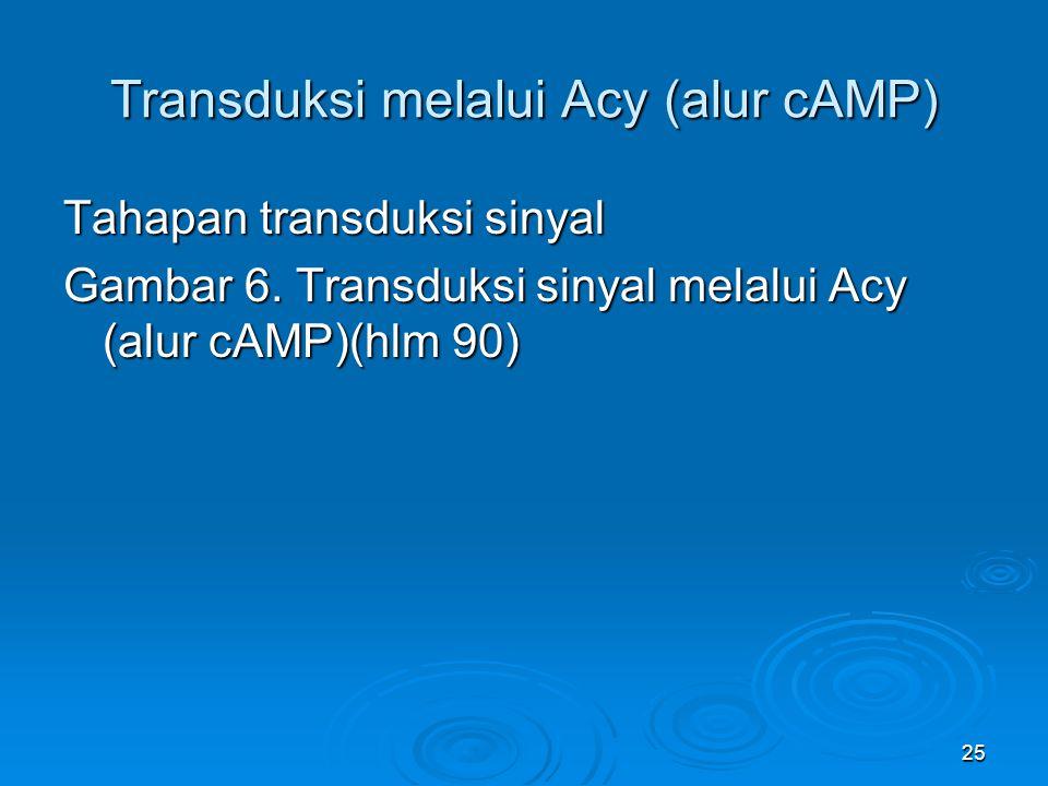 25 Transduksi melalui Acy (alur cAMP) Tahapan transduksi sinyal Gambar 6. Transduksi sinyal melalui Acy (alur cAMP)(hlm 90)