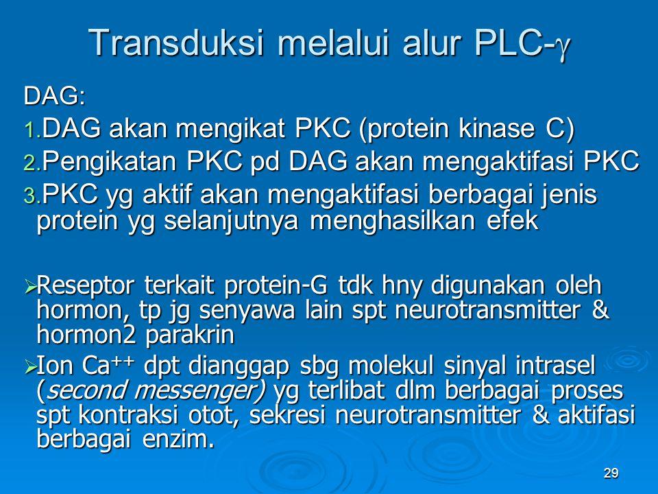29 Transduksi melalui alur PLC-  DAG: 1. DAG akan mengikat PKC (protein kinase C) 2. Pengikatan PKC pd DAG akan mengaktifasi PKC 3. PKC yg aktif akan