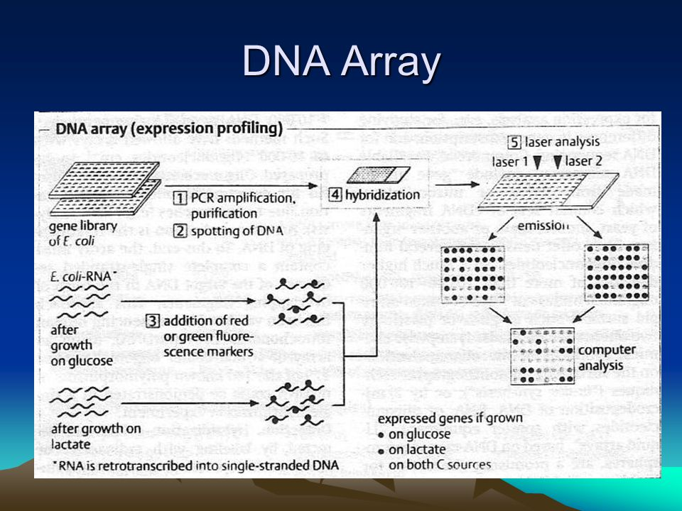 DNA Array