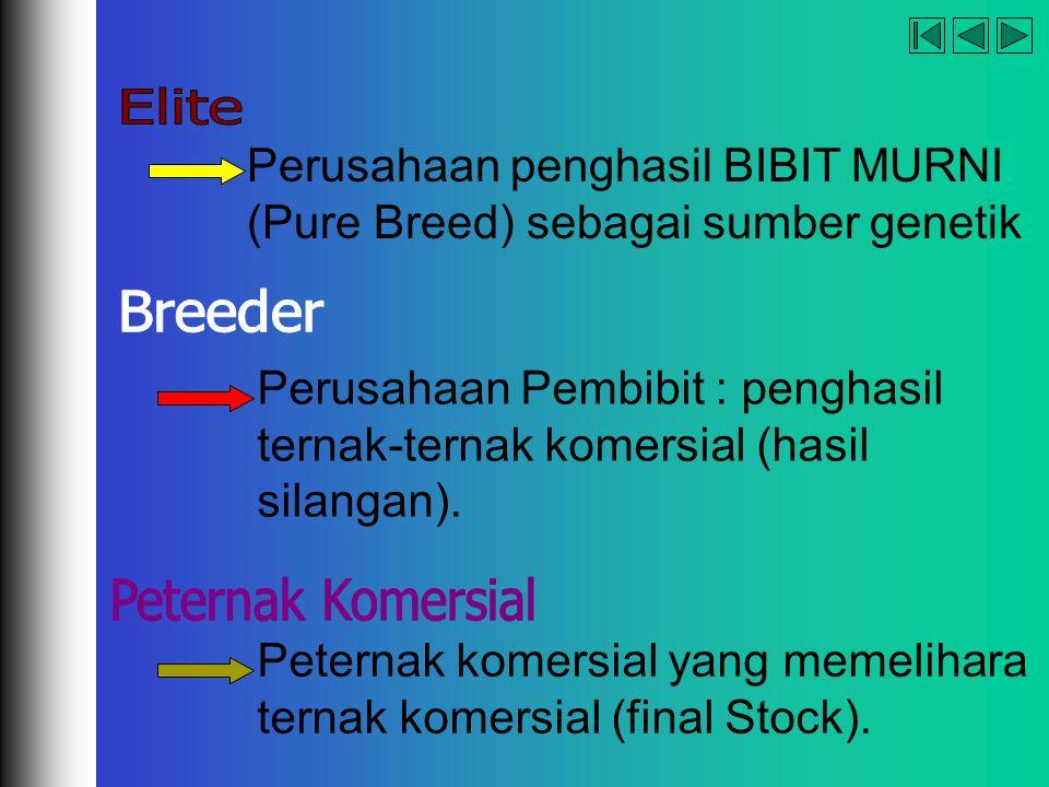 company name organization Perusahaan penghasil BIBIT MURNI (Pure Breed) sebagai sumber genetik Perusahaan Pembibit : penghasil ternak-ternak komersial