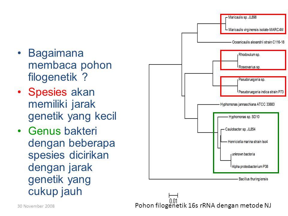 30 November 2008 Bagaimana membaca pohon filogenetik .