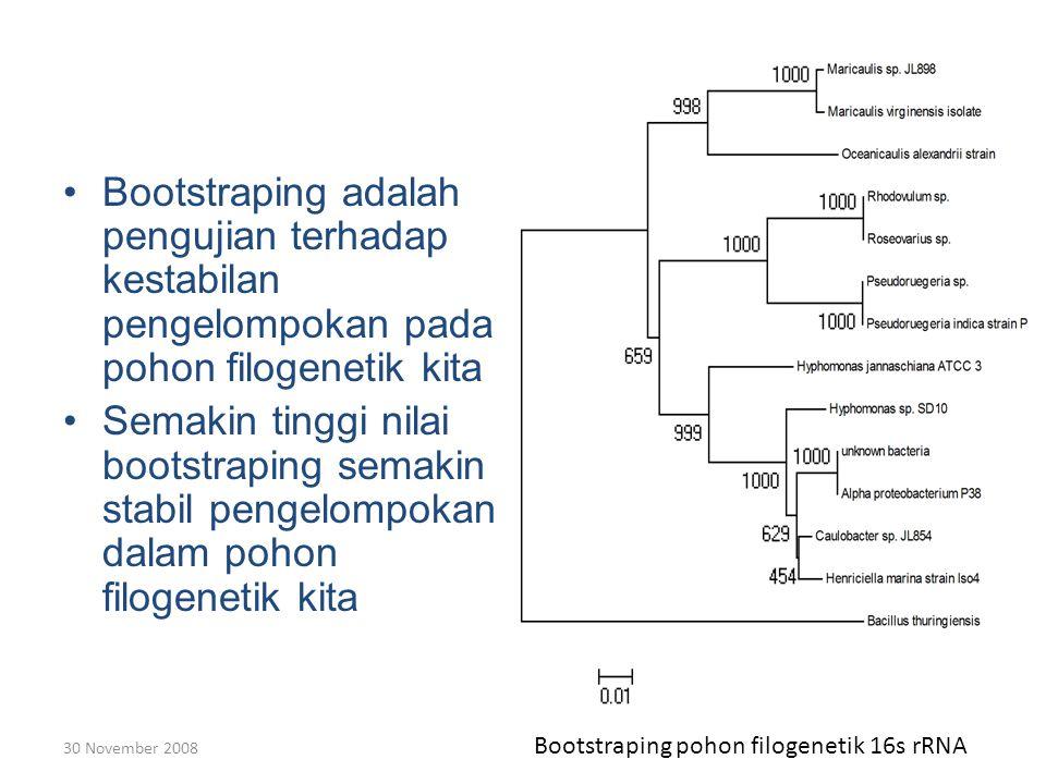 30 November 2008 Bootstraping adalah pengujian terhadap kestabilan pengelompokan pada pohon filogenetik kita Semakin tinggi nilai bootstraping semakin stabil pengelompokan dalam pohon filogenetik kita Bootstraping pohon filogenetik 16s rRNA