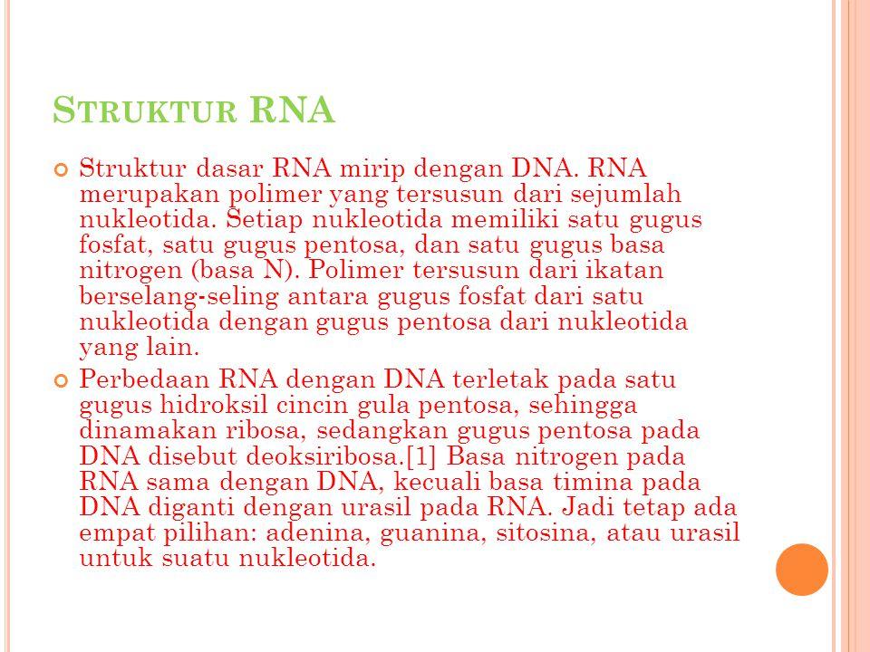 S TRUKTUR RNA Struktur dasar RNA mirip dengan DNA. RNA merupakan polimer yang tersusun dari sejumlah nukleotida. Setiap nukleotida memiliki satu gugus