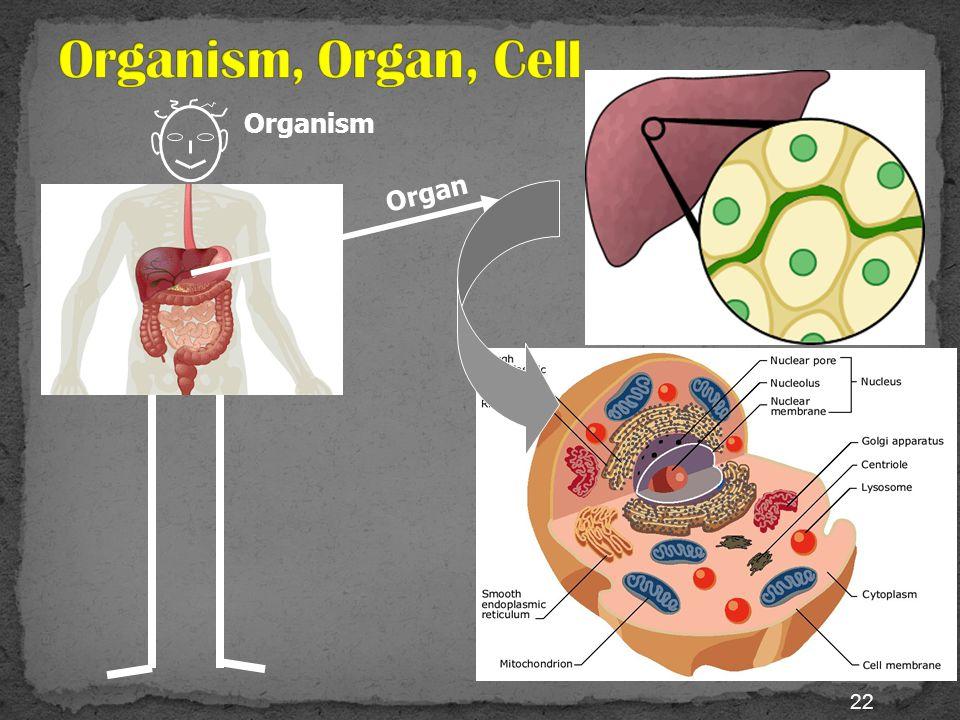 21 terdiri dari banyak sekali sel penyusun Human red blood cellsPlant cellsHuman skin cells