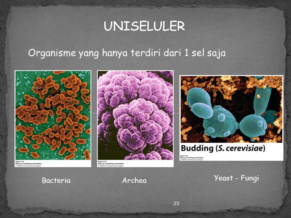 22 Organism Organ