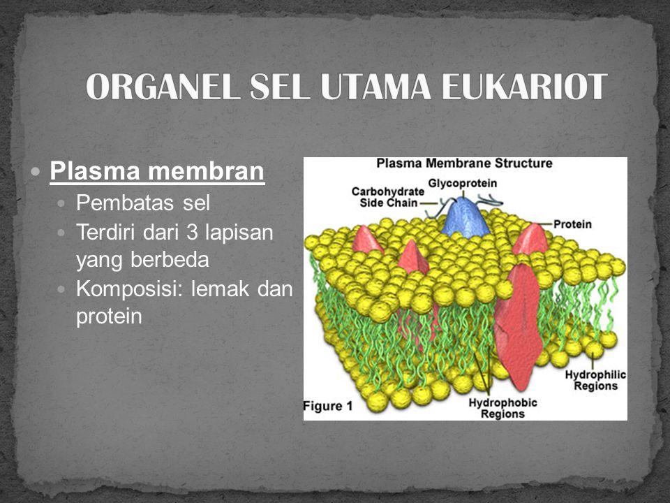 32 STRUKTUR UTAMA Nukleus Membran sel Sitoplasma yg mengandung organel