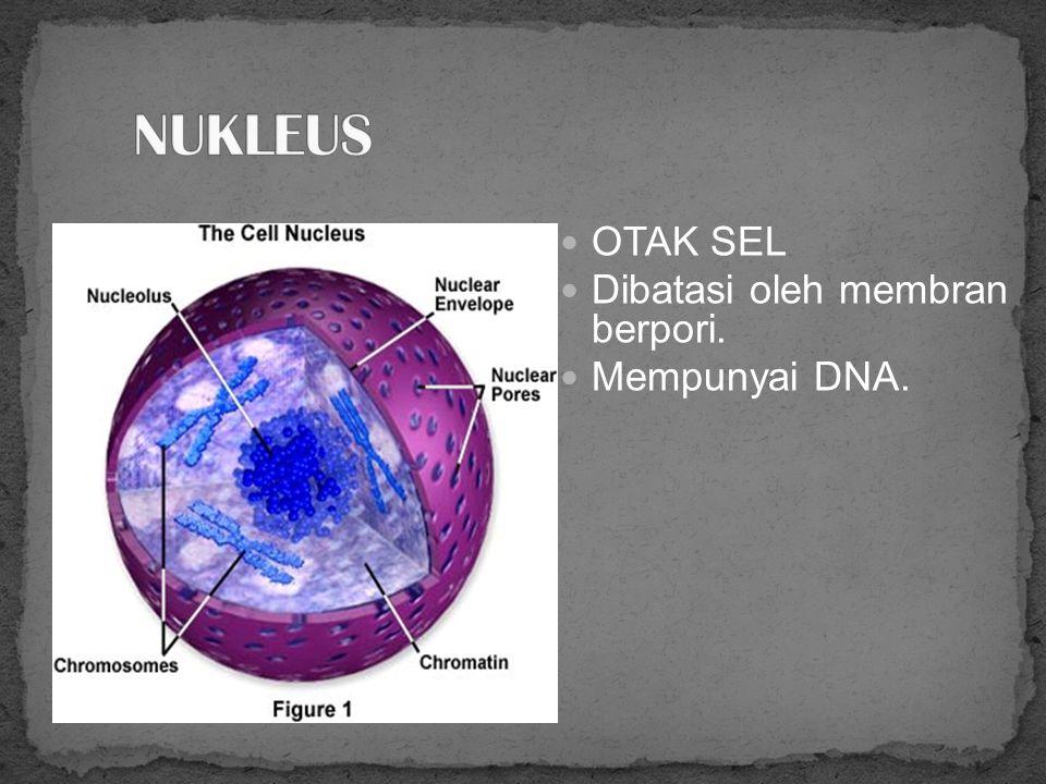 Plasma membran Pembatas sel Terdiri dari 3 lapisan yang berbeda Komposisi: lemak dan protein