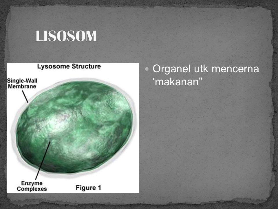 Kantong berupa membran berlapis Berfungsi untuk pematangan protein yang disintesis oleh ribosom/RE