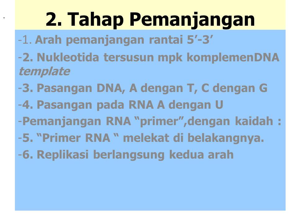 3.Penghentian (Terminasi) 1.Pembuangan RNA primer pada potongan Okazaki 2.Memanjangkan rantai DNA dengan ligase, melepas RNA primer 3.Berhenti (stop)