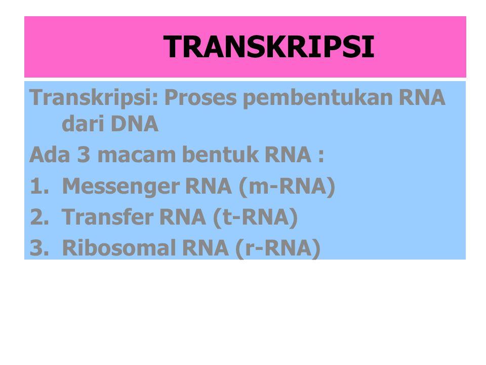 Penjelasan m-RNA,t-RNA,r-RNA m-RNA: membawa sekuen pengkode a.a.