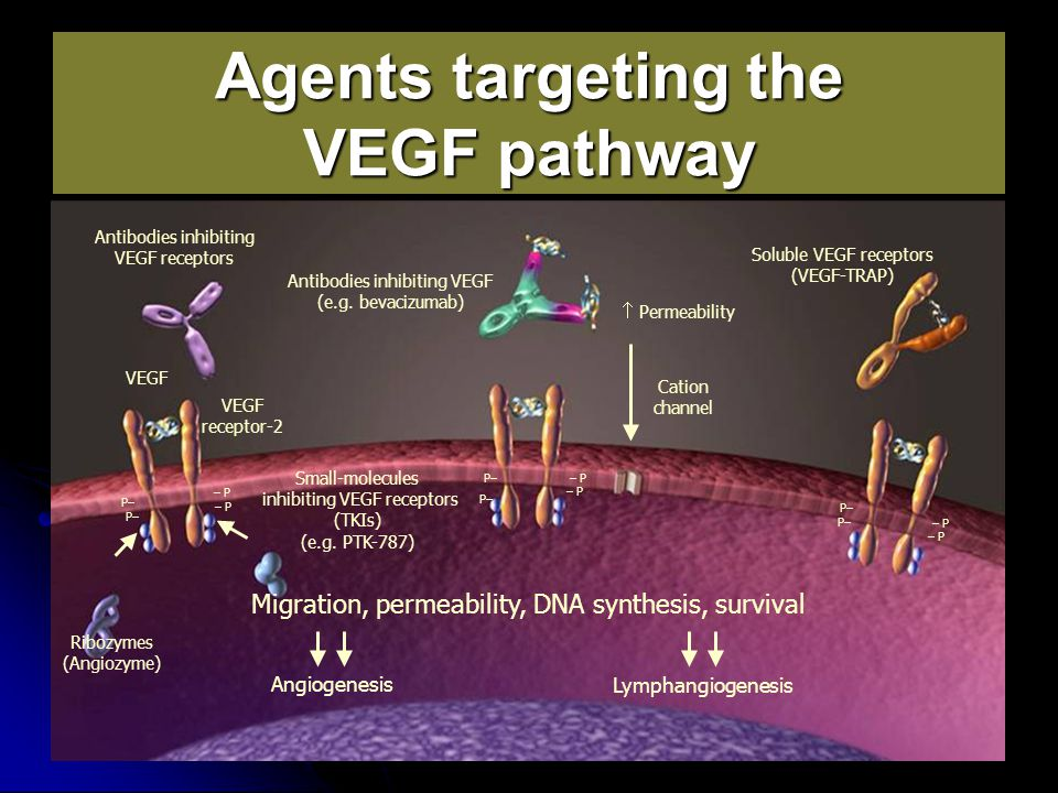Agents targeting the VEGF pathway VEGF VEGF receptor-2 Cation channel  Permeability Antibodies inhibiting VEGF (e.g. bevacizumab) Antibodies inhibiti