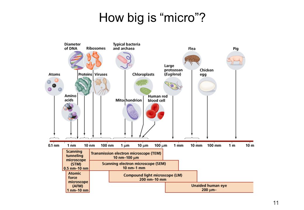 "11 How big is ""micro""?"