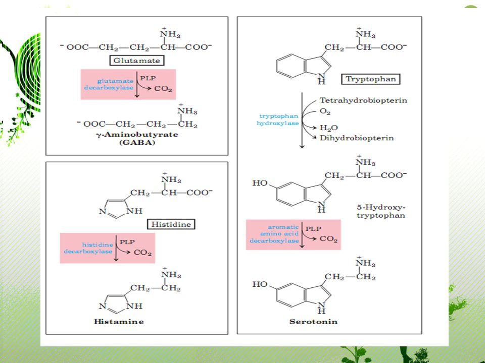 Neurotransmitter yang disintesis dari tryptophan adalah seretonin seretonin ditemukan pada otak, paru-paru, sistem intestinal perut.