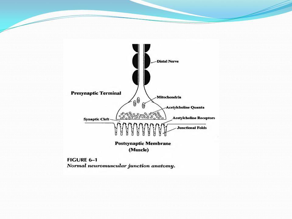 RNS pada orang normal - Quanta ACH berkurang progresif dari penyimpanan primer - Sedikit quanta dikeluarkan tiap stimulasi - Amplitudo EPP , tp krn 'safety factor'  tetap > ambang utk bangkitkan potensial aksi - Stlh bbrp dtk, mobilisasi sekunder mulai gantikan quanta yang berkurang dengan me  EPP