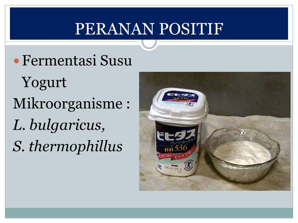 PERANAN POSITIF Fermentasi Susu Yogurt Mikroorganisme : L. bulgaricus, S. thermophillus