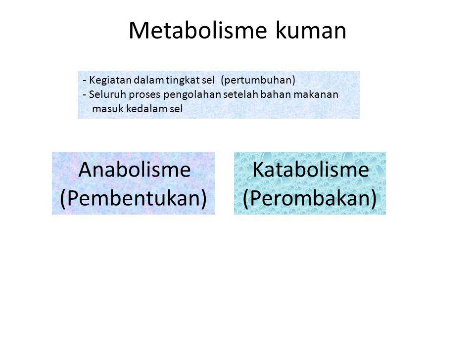 Metabolisme kuman - Kegiatan dalam tingkat sel (pertumbuhan) - Seluruh proses pengolahan setelah bahan makanan masuk kedalam sel Anabolisme (Pembentuk