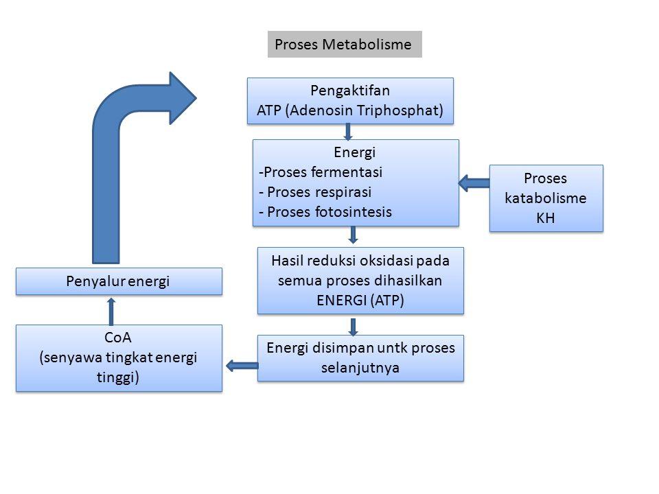 Proses Metabolisme Pengaktifan ATP (Adenosin Triphosphat) Pengaktifan ATP (Adenosin Triphosphat) Energi -Proses fermentasi - Proses respirasi - Proses
