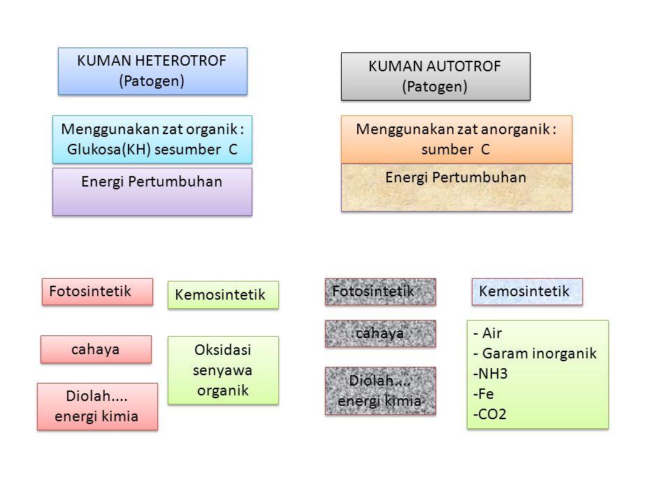 KUMAN HETEROTROF (Patogen) KUMAN HETEROTROF (Patogen) Menggunakan zat organik : Glukosa(KH) sesumber C Energi Pertumbuhan KUMAN AUTOTROF (Patogen) KUM